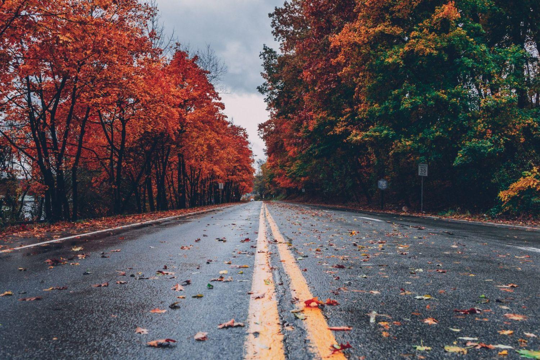 Autumn Shots